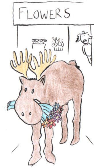 the moose eats flowers from the flower store.